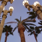 Palm Trees and Lights