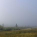 Pingree Park Fog