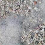 Sea Foam and Shells