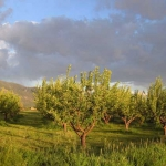 Taos Orchard